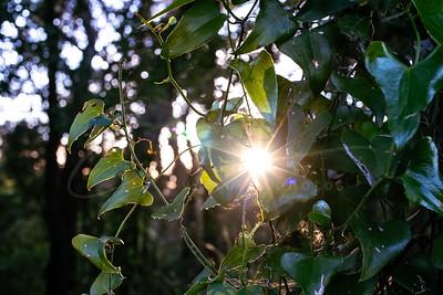 le coucher de soleil en vert | sunset in the green