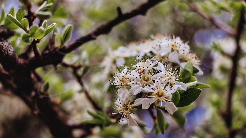 fleurs | flowers | Blüten