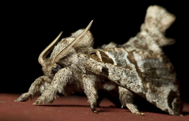 Moth - species unknown