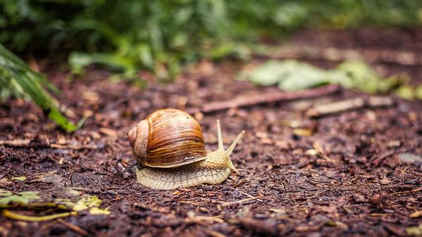 L'escargot a le droit de passage | the snail has right of way