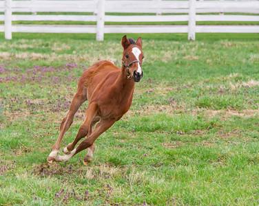 Donamire Horse Farm Foal