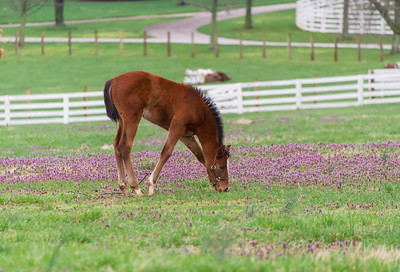 The foals legs are so long they have to spread their legs like a giraffe to reach the ground