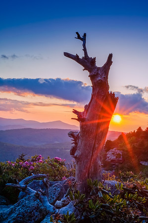 Sunset Tree - Linville, NC