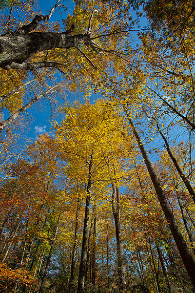 Fall leaves @ Smokey Mountains