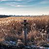 Grands froids en baie de Canche © 2021 Olivier Caenen, tous droits reserves