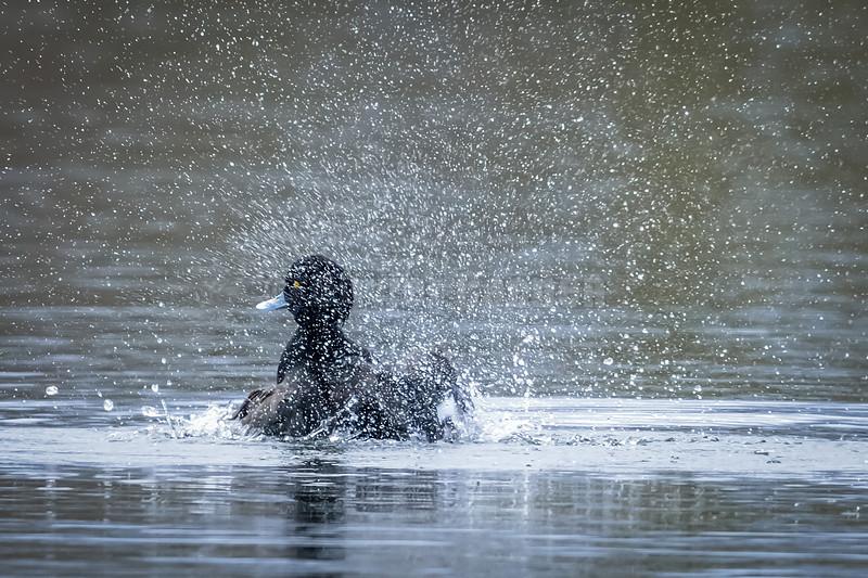 Balade photographique à la plage des Pauvres