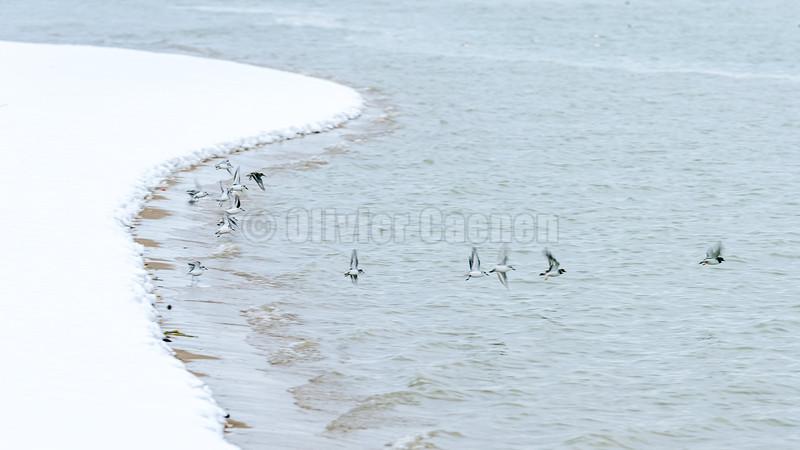 Neige en Baie de Canche © 2009 Olivier Caenen, tous droits reserves