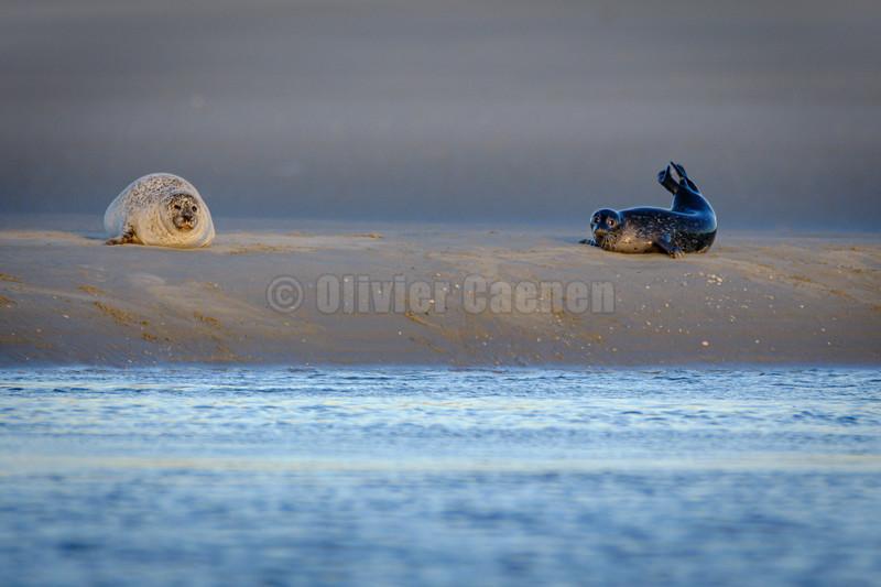 Baie de Canche © 2020 Olivier Caenen, tous droits reserves