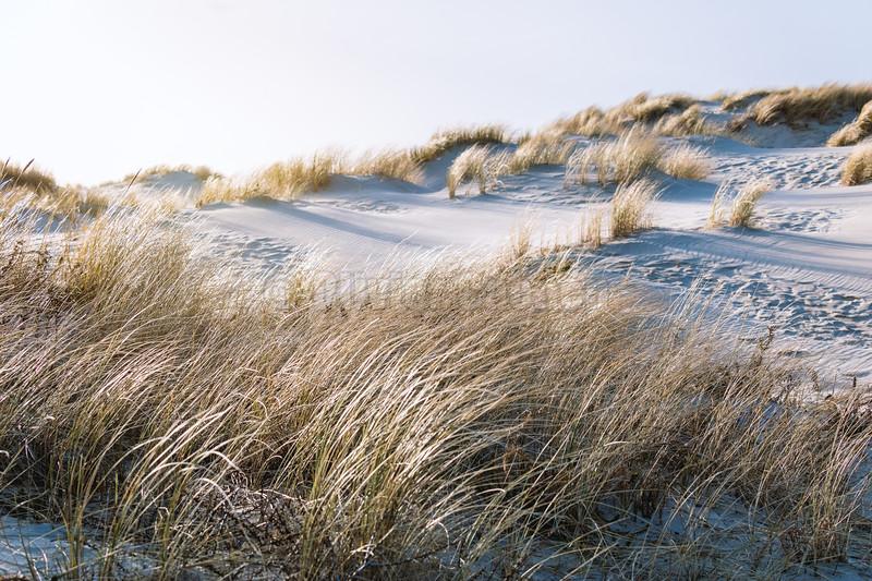 Coup de vent en Baie de Canche © 2021 Olivier Caenen, tous droits reserves