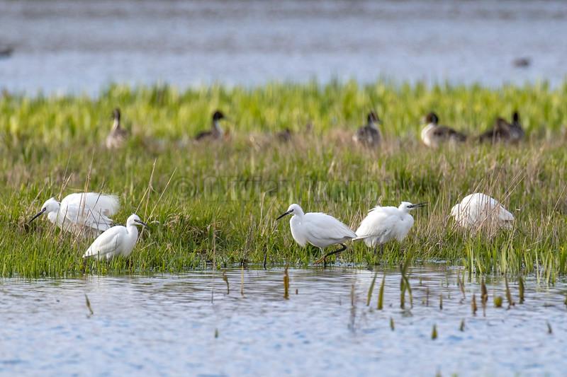 Réserve naturelle de la baie de Canche © 2019 Olivier Caenen, tous droits reserves