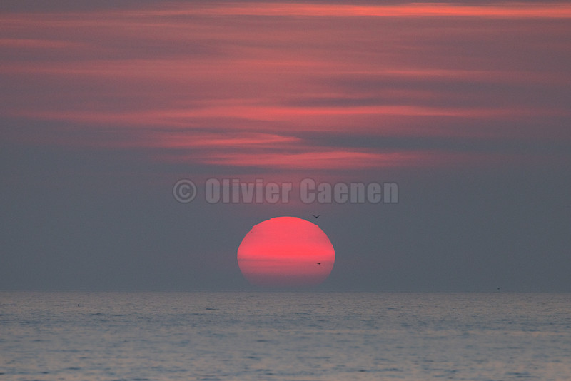 © 2021 Olivier Caenen, tous droits reserves