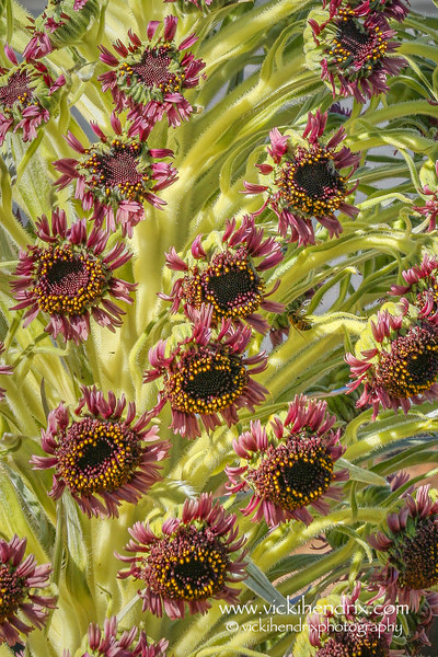 'Ahinahina Flowers