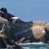 Faune de la reserve naturelle des Sept-Iles