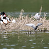 Réserve ornithologique de Grand-Laviers © 2018 Olivier Caenen, tous droits reserves