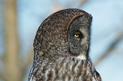 See the nictitating membrane in the owls eye. It is a third eyelid used for protection and to moisten the eye while maintaining visibility.