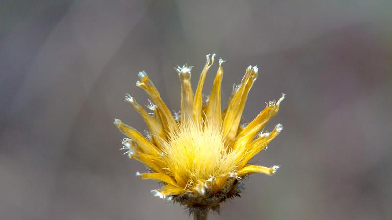 Yellow flower, Lake Renwick Preserve, Plainfield, Illinois