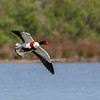 Reserve ornithologique du Teich © 2019 Olivier Caenen, tous droits reserves