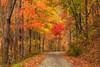 Pretty Fall Color