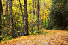 Deep Creek trail in autumn