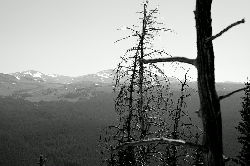 July 20th, 2014 - Cloud Peak and Trees