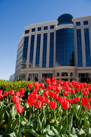 Southpark building with Red Tulips