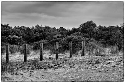 les piles en campagne   wooden piles