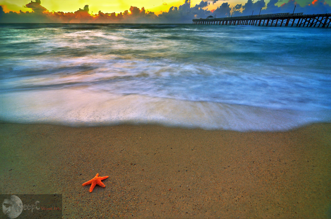 This photo is taken at miami beach before sunrise. I was roaming around by the beach and wanted to capture something interesting. Suddenly I ran into this starfish hidden in the sand. I kept the starfish in clean and took this shot.
