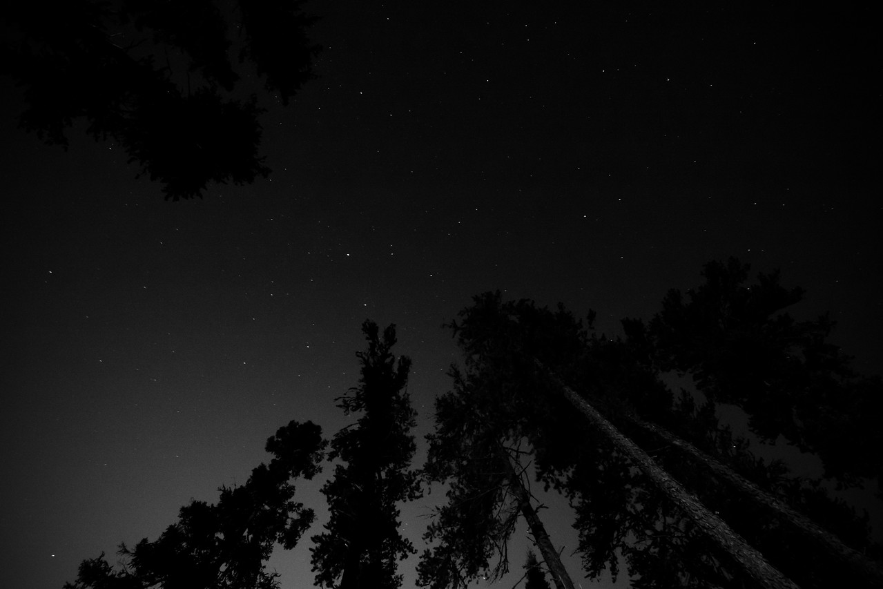 Stars Above The Trees