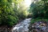 Sunshine on the Creek
