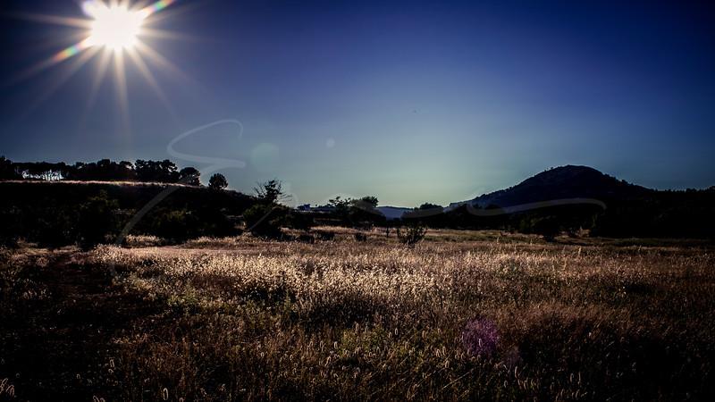 les graminées au soleil | grasses in the sun