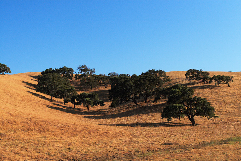 Rolling Plains of California