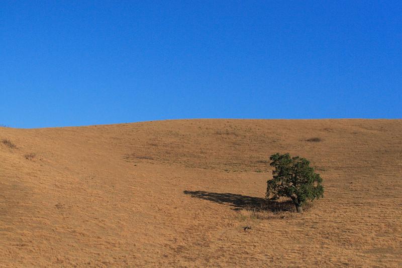 The Soul Tree - California