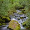 Joyce Kilmer National Forest