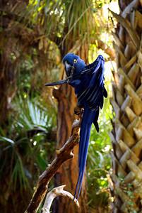 Brevard Zoo | Melbourne, Florida - 0017