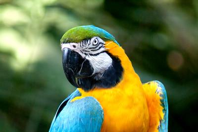 Blue & Yellow Macaw | Brevard Zoo | Melbourne, Florida - 0027