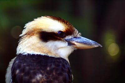 Brevard Zoo | Melbourne, Florida - 0015