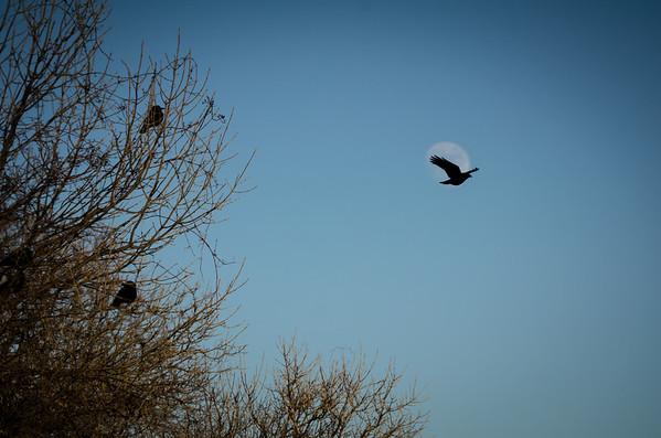 One Crow Moon