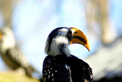 Brevard Zoo | Melbourne, Florida - 0003