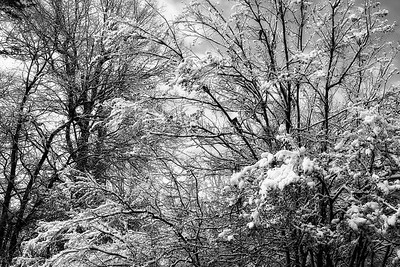 Black and White Snow Scene