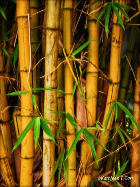 Golden Stemmed Bamboo