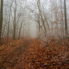 """""""Cold Morning Path"""""""