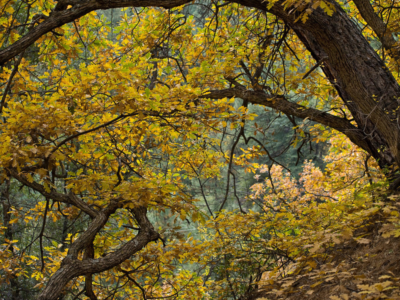 Fall Season in the Bradshaw Mountains of Arizona