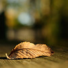 """Leaf Me Alone"""
