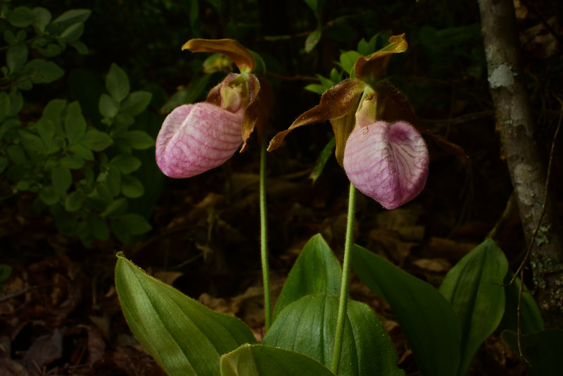 """Lookout Lady Slippers"""