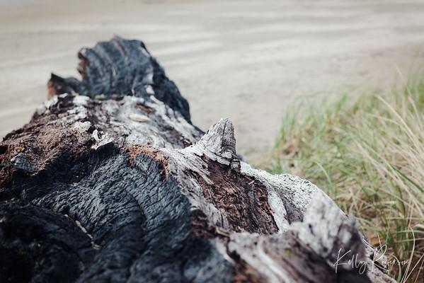 Remnants of a beach log on Cannon Beach, Oregon.
