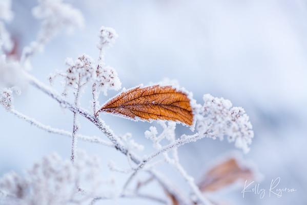 Hanging on through winter