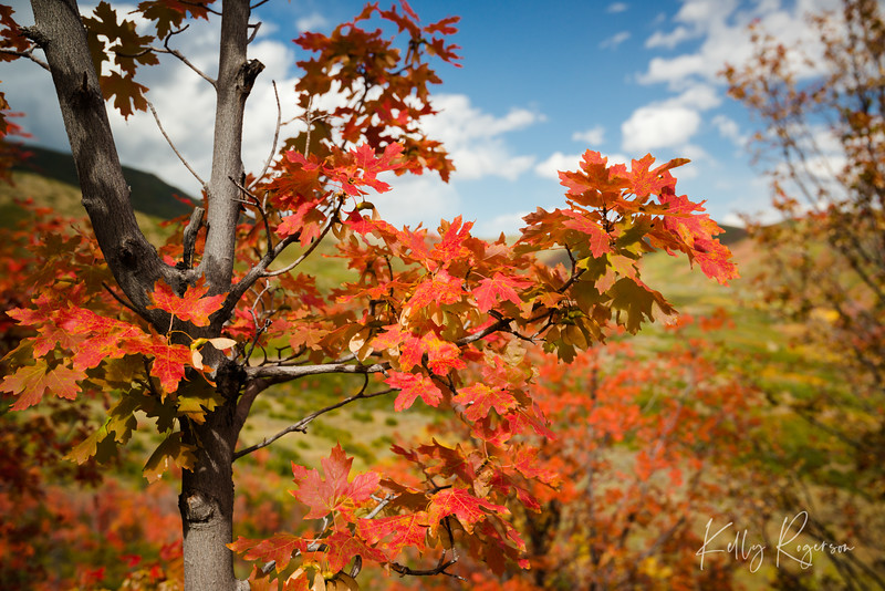 Standing still across the valley of gorgeous fall color.