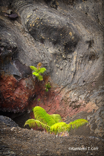 Fern and Lava