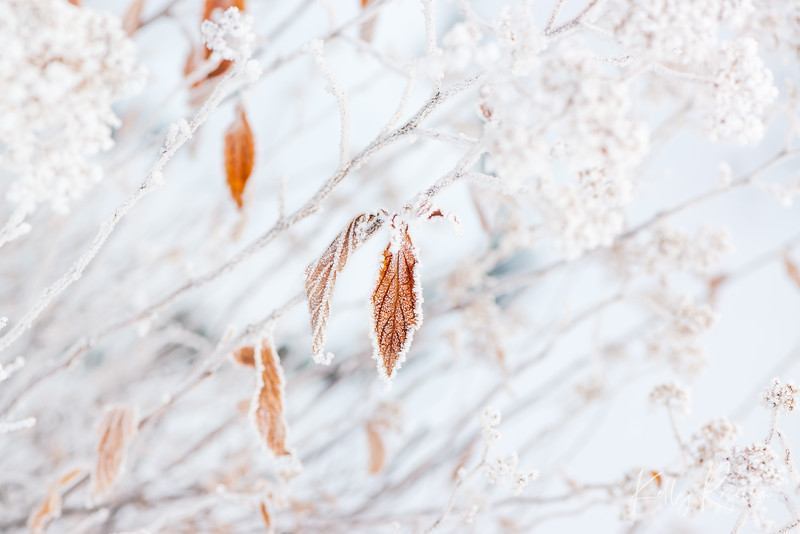 Natures astounds me. Hanging on for dear life through a winter frost.