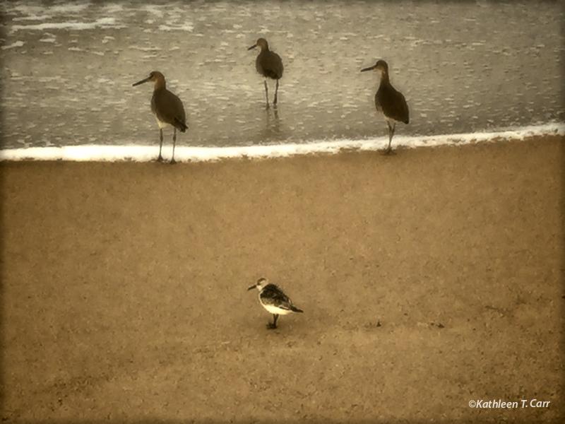 Shorebirds on Beach